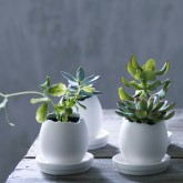 ceramic-egg-plant-pots-rowen-and-wren